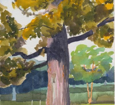 WoL Oringal watercolour of an oak tree with a swing Prince Edward County