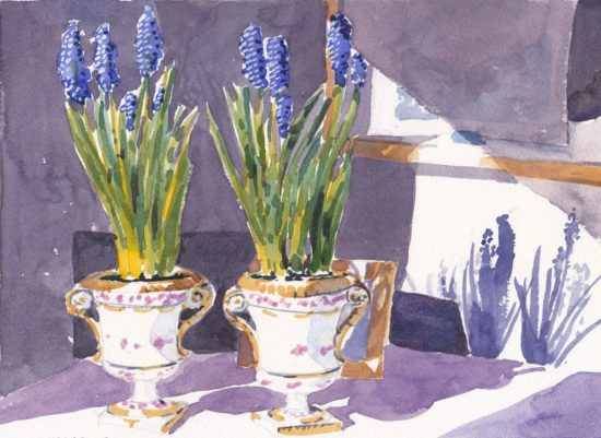 Two small pots of muscari in bloom against shadowed wall with flower shadows on wall original watercolour painting