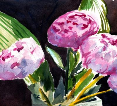 Pink Peonies in bloom watercolour original for sale