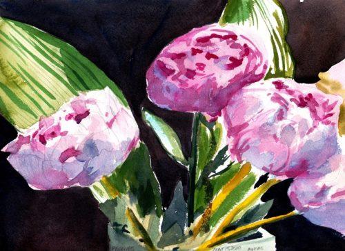 Pink Peonies in bloom watercolour original for sale