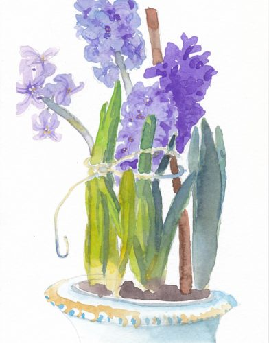 Small watercolor painting of purple hyacinths in bloom in a pot tied with strong to keep from falling