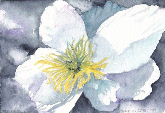 single white peony blossom watercolour Canadian artist