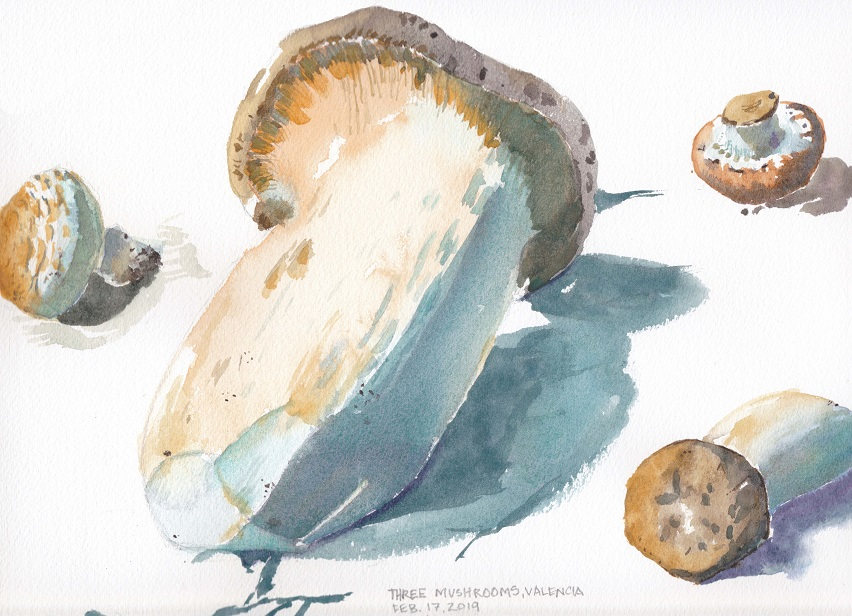 Watercolor painting of three different fresh mushrooms on a white background, Valencia, Spain
