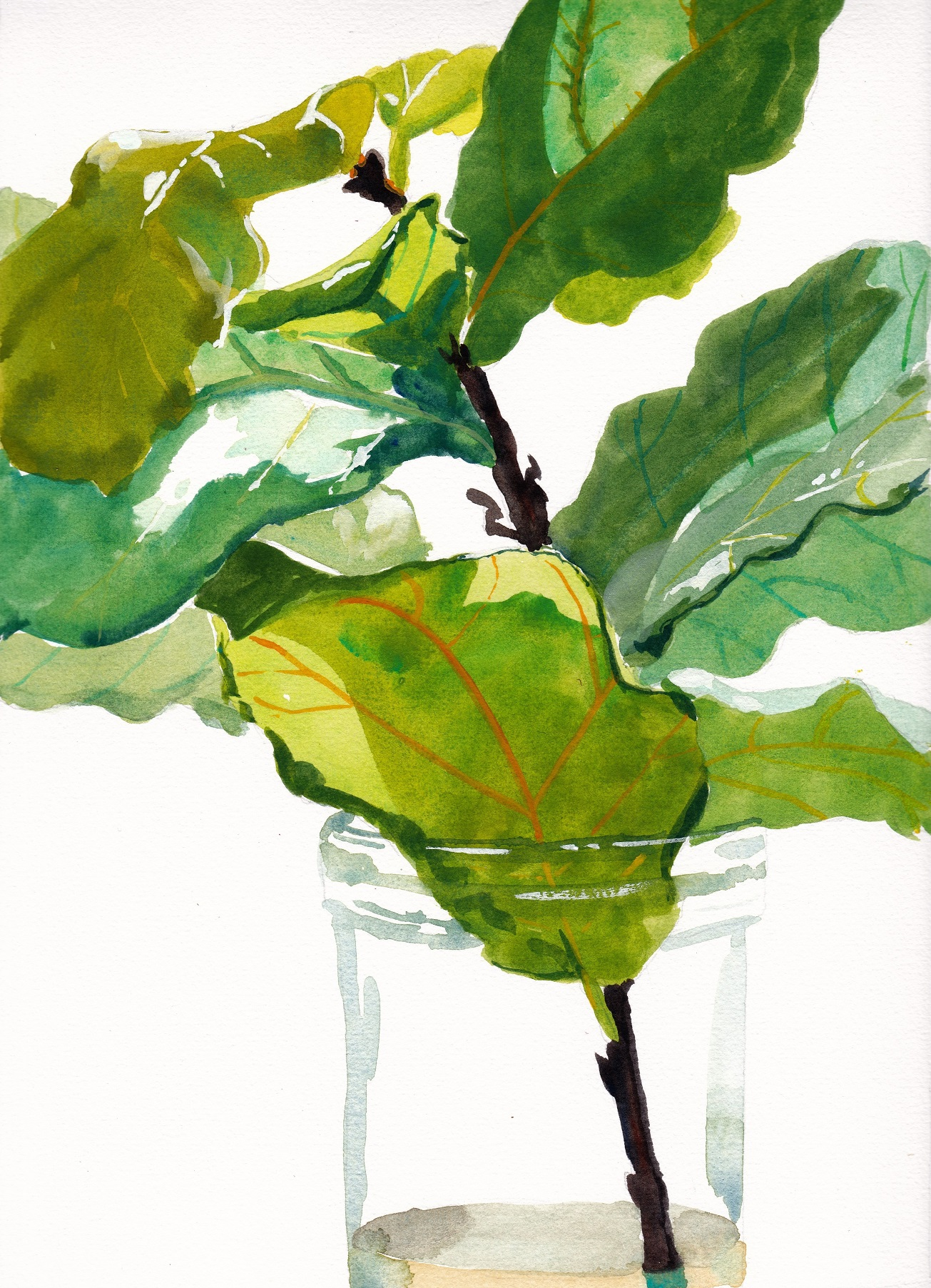 SOLD Small original watercolour painting of fiddle leaf fig branch in glass vase